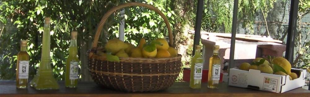 Olio, limoncino, zagare, pompelmi, arance sono i nostri prodotti naturali